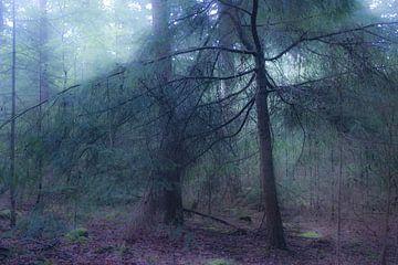 Mysteriöses Licht im Fichtenwald von Ron Poot