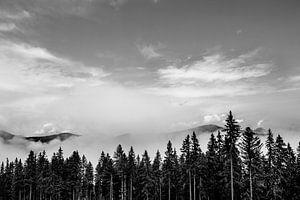 Wanneer de bergen uit het bos opstijgen.