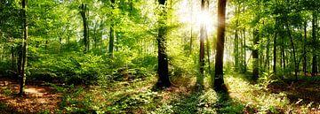 Verträumter Sonnenaufgang im herbstlichen Wald von Günter Albers