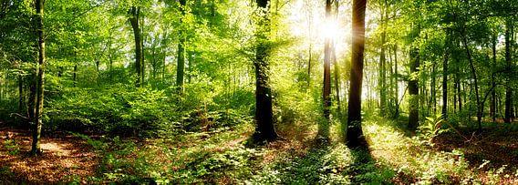 Dromerige zonsopgang in het herfstbos
