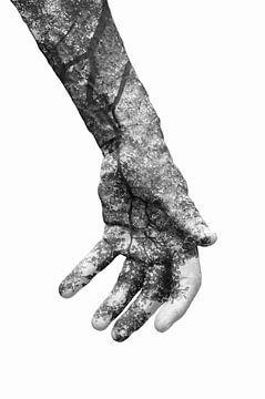 Doppelbelichtung | Symbiose von Lotte Bosschieter