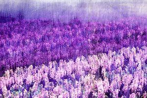 Lila Regen von Paula van den Akker