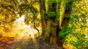 zonnestralen in de vroege ochtend in het bos van eric van der eijk