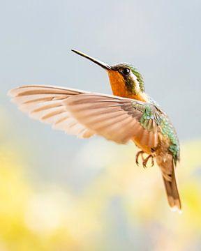 Ein Kolibri in vollem Flug auf der Suche nach noch mehr Süßigkeiten von Remco Piet