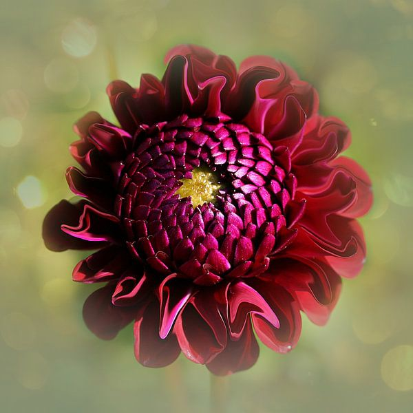 fairy flower van Yvonne Blokland