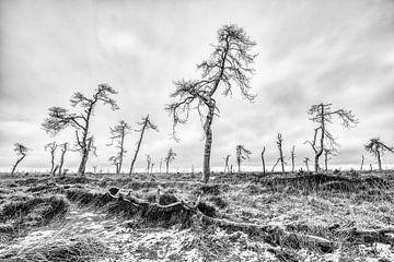 Die toten Bäume des Hohen Venns von Jim De Sitter