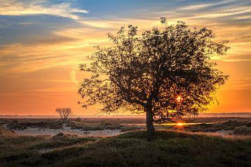 Baum am Sonnenaufgang Dwingelderveld Drenthe Niederlande von R Smallenbroek