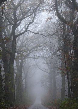 bomenlaan in de mist van Tania Perneel