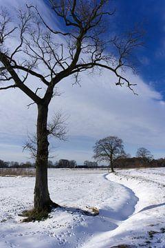 Baum im Schnee von Folkert Jan Wijnstra