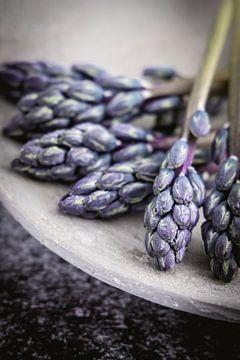 Hyacinten van Maaike Zaal