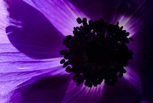 Purple van Marian Waanders