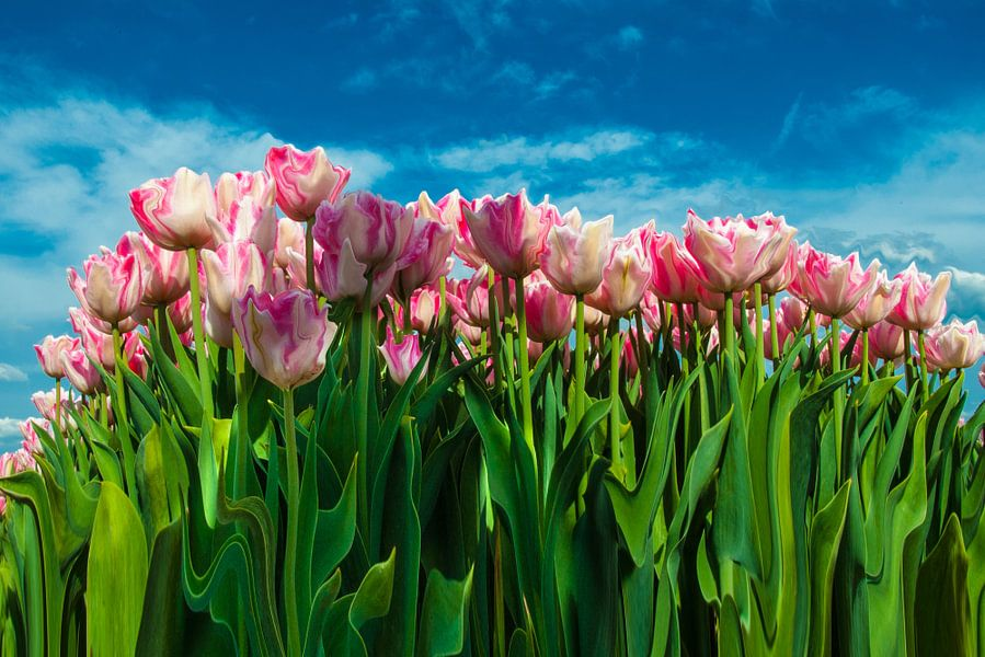 Abstract van tulpen  van Brian Morgan