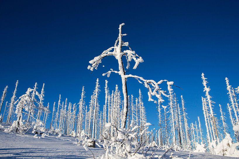 Winter im Böhmerwald von Rudolf Brandstätter