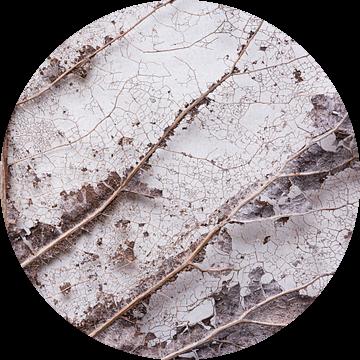 Verdord blad structuur patroon nerven van Lucia Leemans