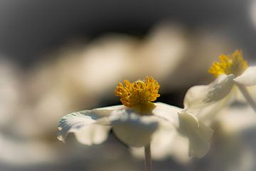 printemps sur Tania Perneel