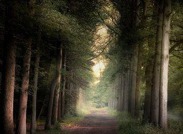 Ombres et grands arbres sur