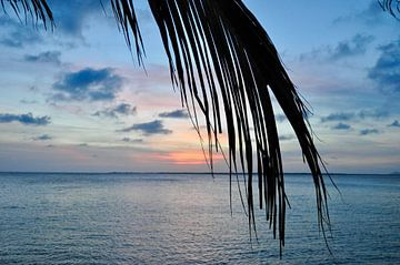 De zon achter de palmbladeren van Myrthe Visser-Wind