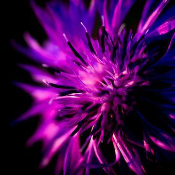 Wilde paarse bloem van Danny van den Berg