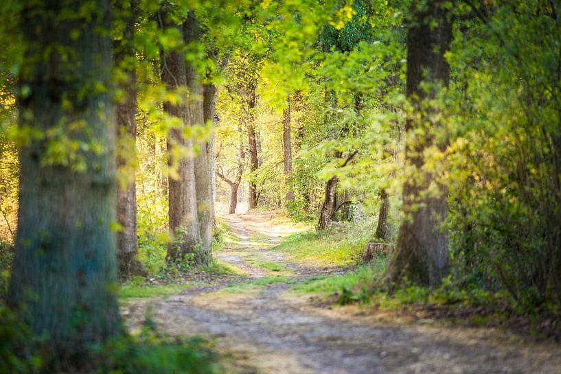 A Walk in the forest van Juul Hekkens