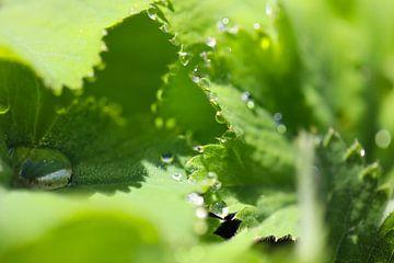 Druppels op groen blad van Marieke Funke