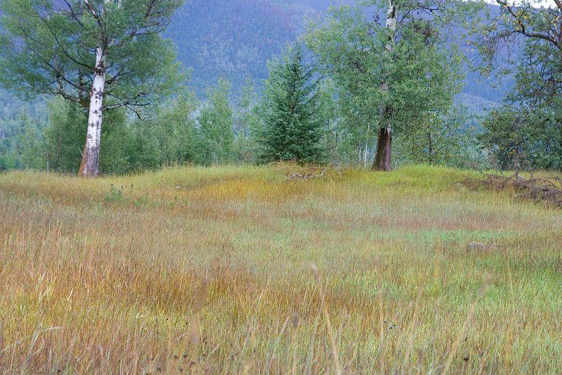Different Colors, Wells Grey Parc Canada van Karin Hendriks Fotografie