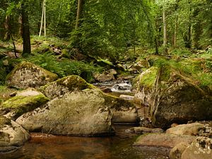 Kalte Bode River in the Harz Mountains