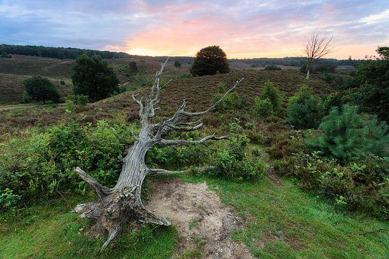 Dode boom van Jelmer Reyntjes