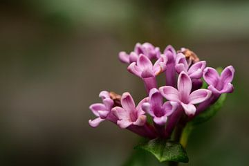 Kleine paarse bloemetjes van Gerard de Zwaan