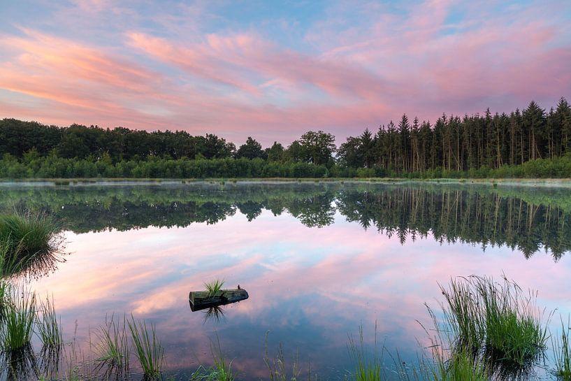 Reflecterend Roze van Ron Buist