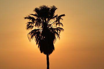 Zonsondergang Cyprus, oranje lucht met silhouette van een palmboom van