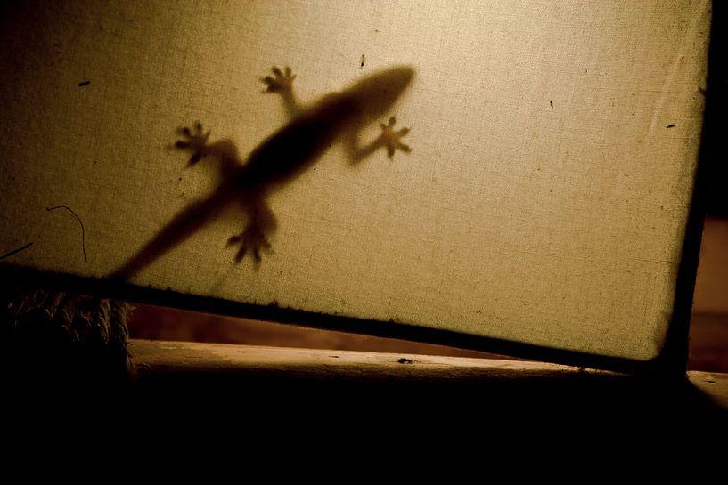Gecko van BL Photography