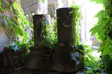 Säulen der alten Kirche mit Efeu überwuchert von Koolspix
