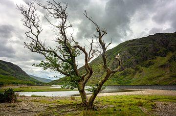 Doolough Valley, Irland von Bo Scheeringa Photography