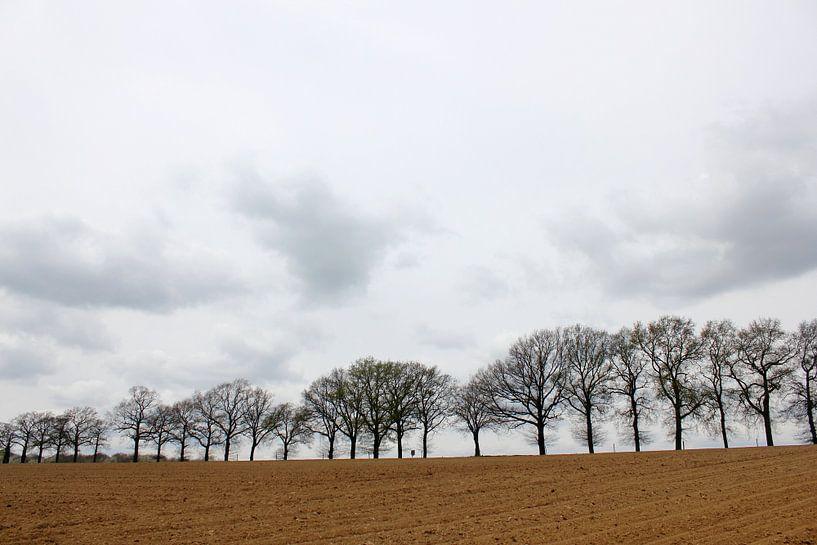 Bomenrij van Rob Hendriks