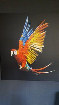 Klantfoto: Scarlet Macaw van Ulrich Brodde