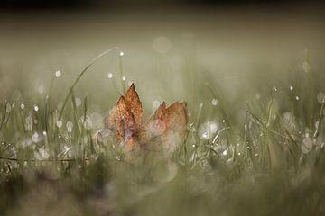 bokeh herfst part 3 van Tania Perneel