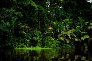 Tortuguero jungle van Costa Rica.