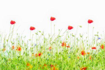 Mohnblumen tanzen im Wind von Francis Dost