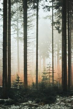 Nevel door het bos. van