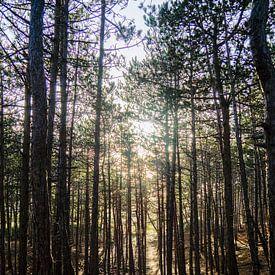 Gegenlicht auf den Bäumen von Martijn Tilroe