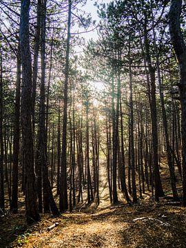 Rétro-éclairage sur les arbres