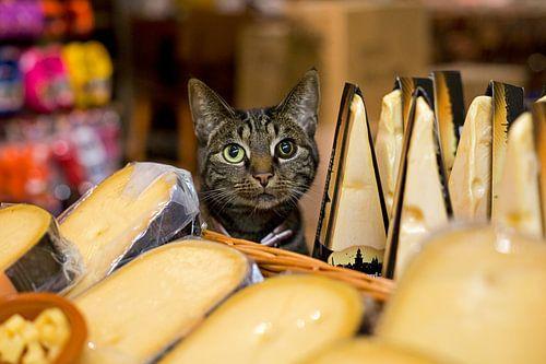 Shopcat cheesestore, Amsterdam von Robert van Willigenburg