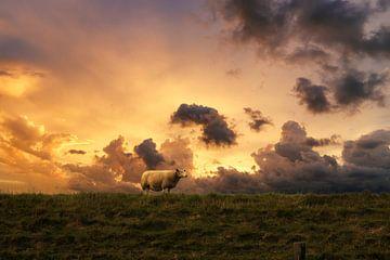 Schaap in de zonsondergang Strijen van Arjen Roos