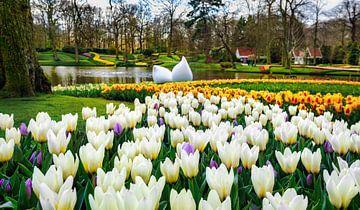 Le parc Keukenhof par une belle journée de printemps sur Chihong