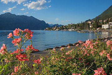 Promenade du lac de Malcesine avec des roses en fleurs sur Susanne Bauernfeind