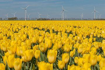 Geel tulpenveld in de Noordoostpolder met windmolens von Tonko Oosterink