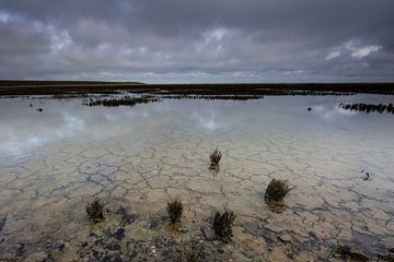 Wadden gebied op het eiland van Terschelling! van Peter Haastrecht, van