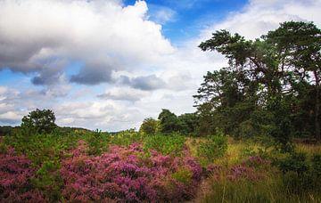 Heideland Niederländisches Wetter von natascha verbij