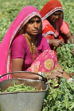 Vrouwen werken op het land von Cora Unk