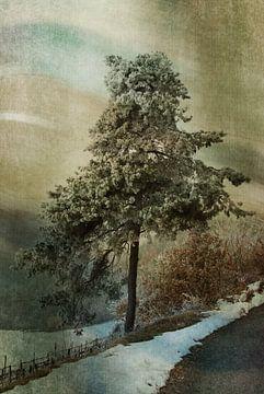 Eenzame boom von Karen Havenaar